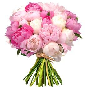 Букет из 25 пионов нежно-розовой и белой гаммы